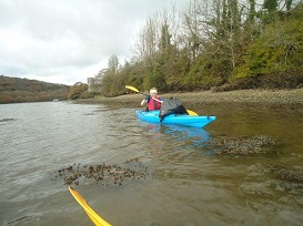 Conducting a estuary clear up and bird survey via kayak in Cornwall on the river Fowey