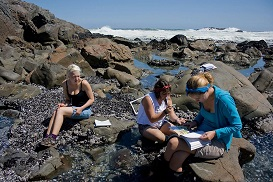 Studying the correlation between rock pool complexity and invertebrate biodiversity - I am on the right in blue